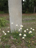 Typical view:  concrete and flora