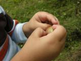 Examining the apple orchard's bounty