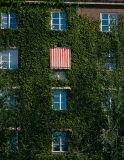 The overgrown house