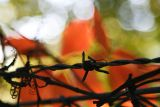 September 22: Barbed wire