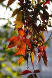 October 2: Autumn closing in