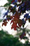 October 10: Backlit leaf