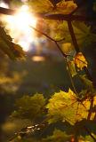 October 13: Friday backlight