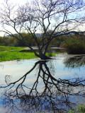 madrona_marsh__nature_preserve