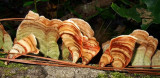 Colorful fungus on a fallen tree