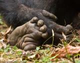 Chimpanzee hand and foot