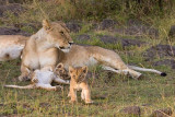 The two smalles, cutest! cubs