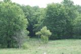 Osprey view