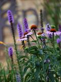 Summer Flowers 2.jpg