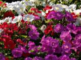 Summer Flowers 4.jpg