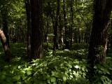 I Love the Woods_1.jpg
