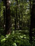I Love the Woods_2.jpg