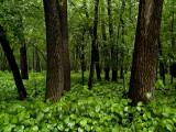 Woods in the Rain_1.jpg