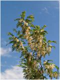 Blooming Tree.jpg