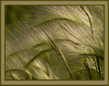 Whispy Grass in the Wind.jpg