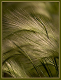 Whispy Grass in the Wind_1.jpg