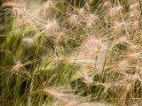 Wild Grasses.jpg