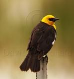 Birds of Sierras, CA