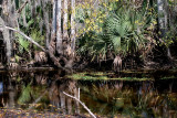 Louisiana swampscapes