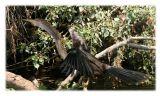Louisiana feathers 2006