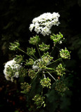 Wayside bouquet