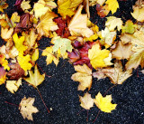 leaves on tarmac