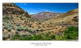 Lupine Across The Gorge.jpg