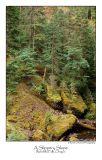 A Slippery Slope.jpg