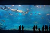 Churaumi Aquarium, Okinawa