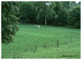 South pasture, Tippecanoe County, August 1977