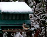 12/12/08 - Snowy Bird Buffet