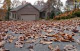 P1060557 Fall has fallen