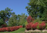 DSCF1797 Fall Color Begins