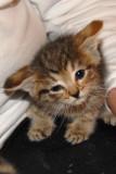 Orphaned Kittens