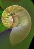 green nautilus