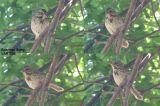 Sparrow Song text.JPG