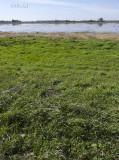 Shore Bird Marsh