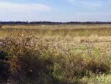 The Marsh Needs Water