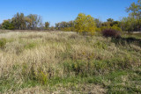 Fall Wetlands