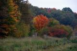 An autumn morning walk