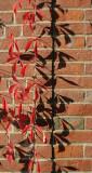The Garden Wall