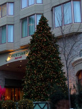 The Marriott's Tree