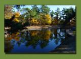 The Park Pond