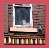 The Judgemental Cat
