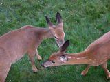 Fiona & Daphne