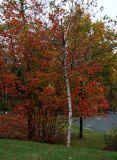 Driveway Colors