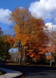 Windsor Tree