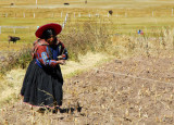 Peruvian Indian woman pulling a rope (with a cow on the other end) San Pedro de Raqchi