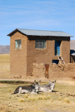 House with donkeys