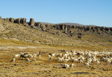 The local people are still able to graze their flocks within the reserve boundaries
